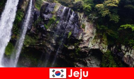 韩国济州亚热带火山岛,为外国人提供令人惊叹的森林