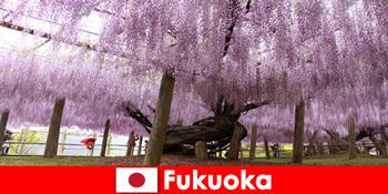 福冈日本原生态中陌生人的自然之旅