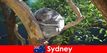 目的地悉尼澳大利亚在异国情调的动物园与过夜的经验