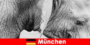 德国慕尼黑最原始动物园的游客特别之旅